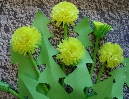 У нас на Урале самой первой приметой весны становится появление одуванчиков. фото 2