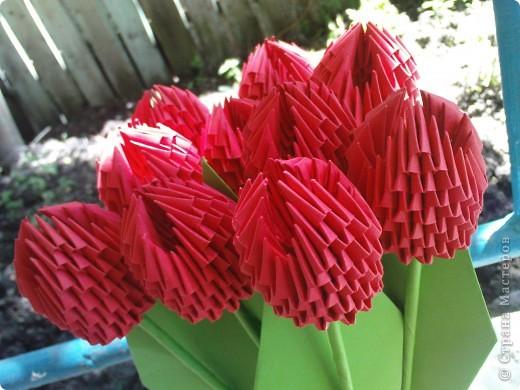 тюльпаны фото 5