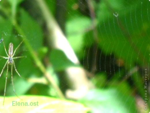 Оригинальный вязаный жакет выполнен из секционной пряжи. В исполнении достаточно прост, что придает ему дополнительное очарование. Вдохновленная строением паутины, я создала эффектный весенний наряд. Вяжется изделие по кругу, почти как паучок плетет свои ловчие сети.  фото 5