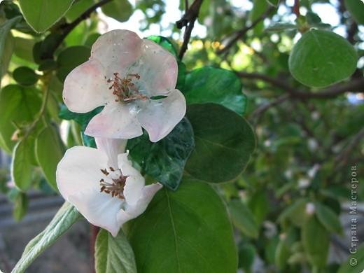 """Чтобы показать свое творение """"во всей красе"""", я разместила свою веточку рядом с настоящими цветами.Надеюсь, вы нашли мой цветок? фото 3"""