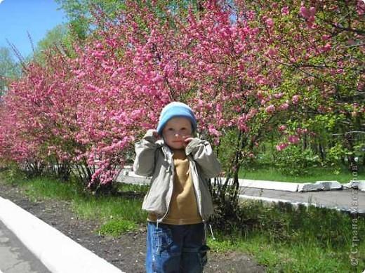 Наконец то и в наш город пришла весна, распускаются первые цветочки, на березе появились листочки. фото 5
