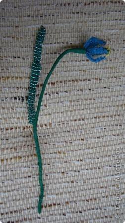 Пролески - это голубые подснежники. фото 2