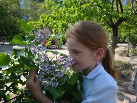 С душистой веточкой сирени Весна приходит в каждый дом  фото 3