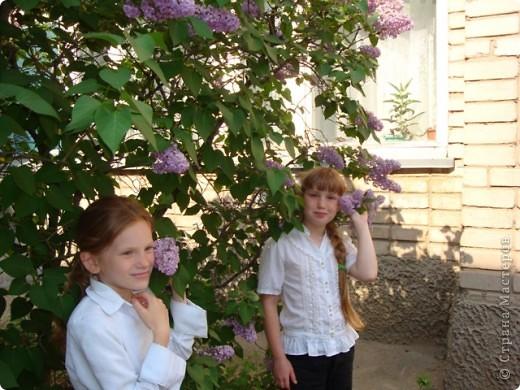 С душистой веточкой сирени Весна приходит в каждый дом  фото 2