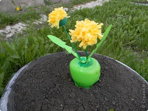 Маленькое пушистое солнышко-одуванчик! первый весенний цветочек... фото 1