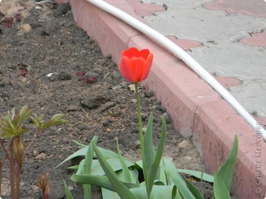 А это мой цветок. Сделал я его из бумаги и картона. фото 3