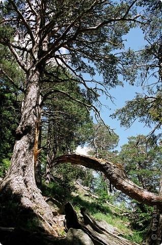 """Весеннее дерево в технике """"бумагопластика"""" фото 4"""