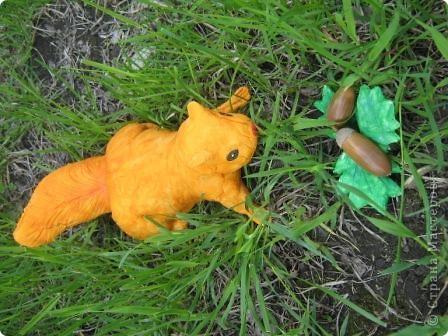 Белка в траве фото 1