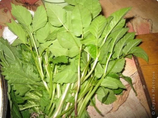 Весна. Пробуждение природы. Хочется чего-нибудь новенького, витаминного. А может, сделаем салатик с одуванчиками?...  фото 5
