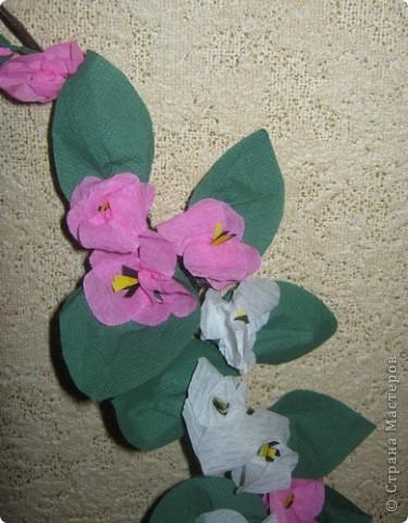 Яблони в цвету фото 2