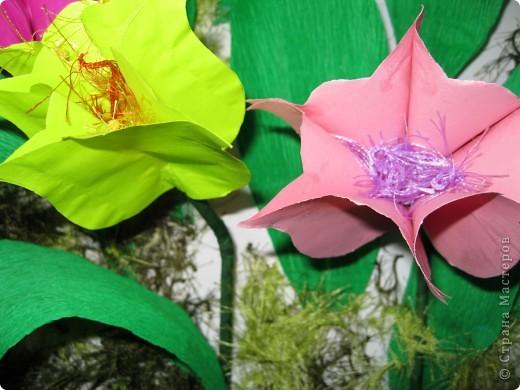 Феерия тюльпанов фото 8