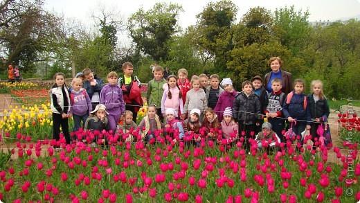 Феерия тюльпанов фото 2