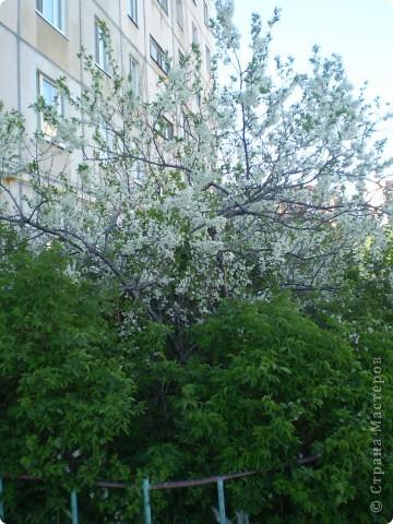 Вот такое дерево-вишня в цвету, получилось у моих четырехлеток... фото 2