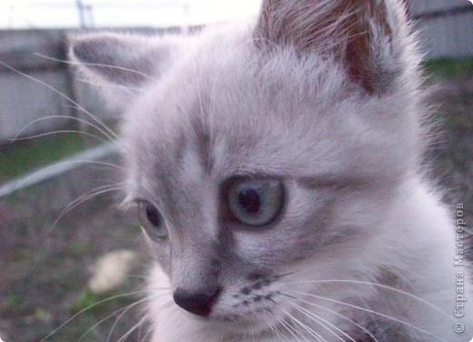 Котенок Степа  фото 2