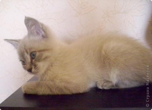 Котенок Степа  фото 3