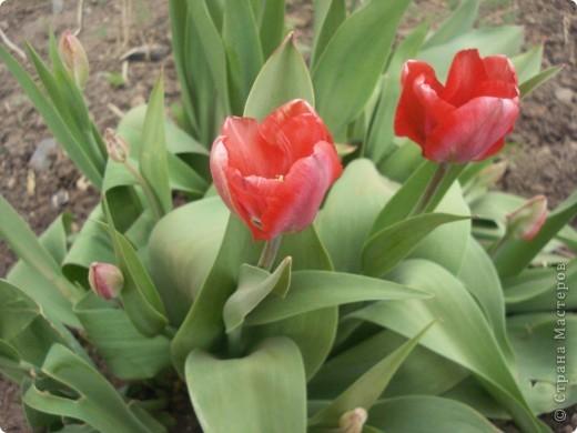 Цветы для бабушки фото 2