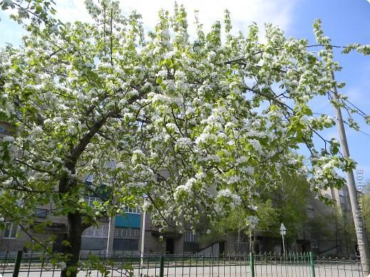 Мне очень нравятся цветущие весной