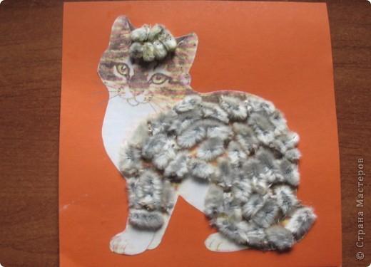 Котенок Степа  фото 1