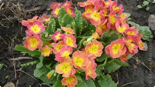 Весенние цветочки. фото 2