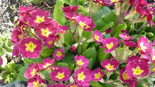 Весенние цветочки. фото 3