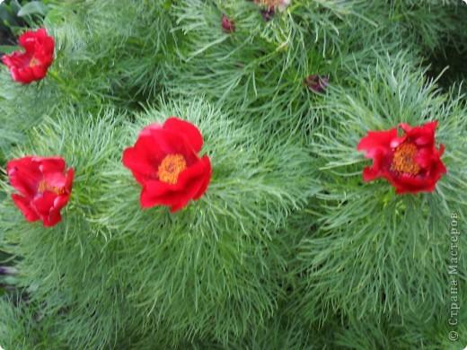 Редкий цветок фото 2