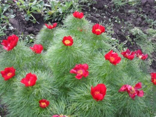 Редкий цветок фото 3