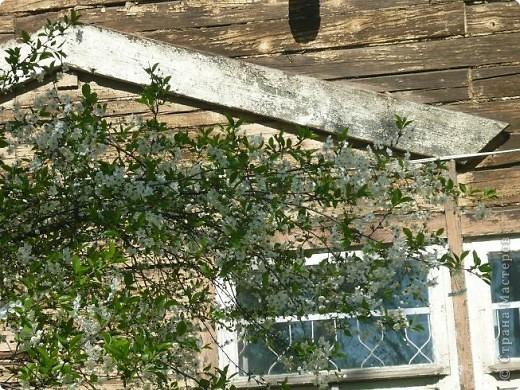 Веточка вишни. фото 7