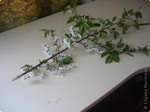 Веточка вишни. фото 4