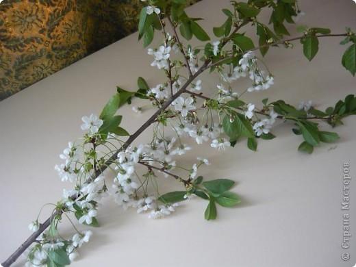 Веточка вишни. фото 5