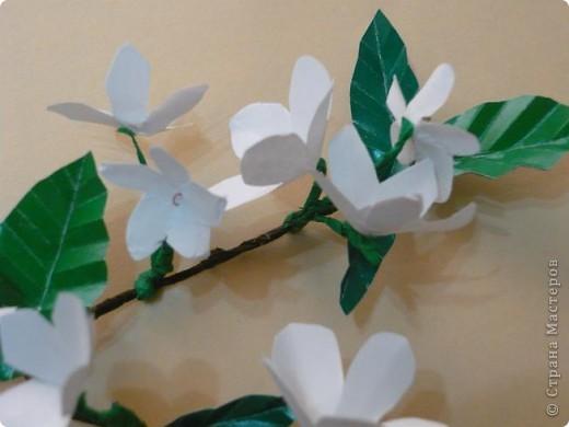 Веточка вишни. фото 2