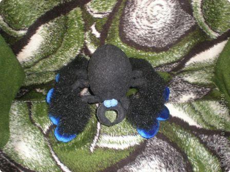 Это я - паучок, проснувшийся после зимней спячки. фото 1