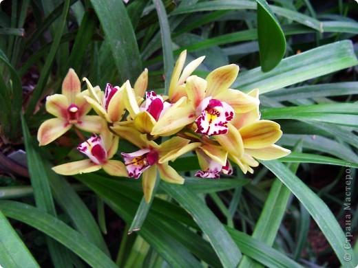 """Колье """"Орхидеи"""" На его создание меня вдохновили удивительные цветы орхидей. фото 5"""