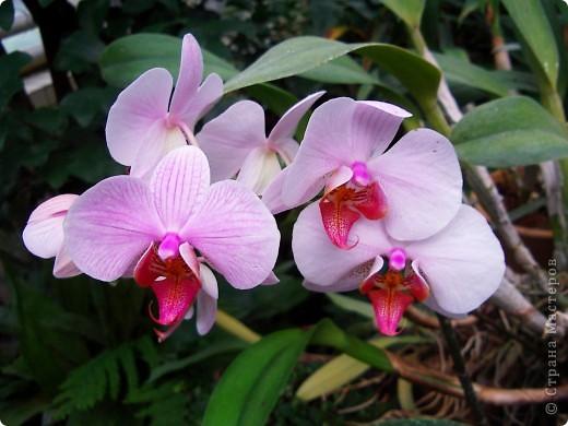 """Колье """"Орхидеи"""" На его создание меня вдохновили удивительные цветы орхидей. фото 4"""
