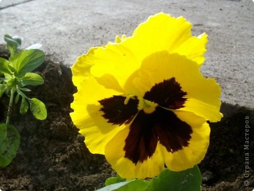 """Вот такой весенний тапок для расчесок у меня получился, который я изготовила в технике мокрого валяния. Работу назвала """"Весеннее пробуждение"""" потому что вспомнились слова песни из к/ф """"Весна: """"И даже пень в весенний день простой берёзкой стать мечтает!"""" А у меня тапок зацвел :) фото 5"""