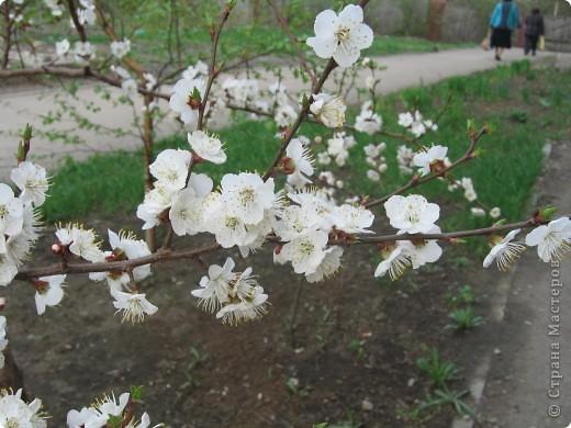 """Это веточка абрикоса. Цветы я сделала из гофробумаги, а тычинки из пряжи - """"травка"""". фото 2"""