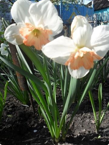 Цветы весны! фото 2