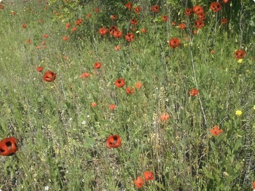 Мак- цветок с мужским именем, но нежный как сама весна!!! фото 4