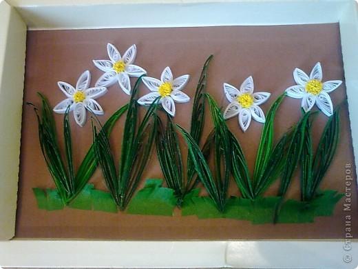 Нарциссы, созданные мной. фото 1