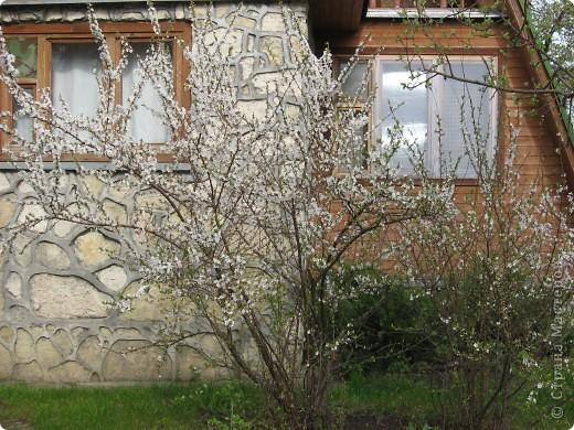 Весна - это время чудес. Все пробуждается после долгого сна. С каким нетерпением мы ожидаем появления первых зеленыз листосков. А сколько восторга вызывают цведущие деревья и кустарники.  В своей работе мы попытались отразить этот момент. Работа достаточна большая, ее выполняли несколько человек, для этого работа была разбита на три части, каждая из которых выплеталась отдельно, затем все соединили в одно целое.  фото 2