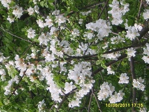 Пришла весна! Около нашего дома зацвело красивое дерево!  Мне захотелось сплести похожее!И вот, что у меня получилось! фото 2