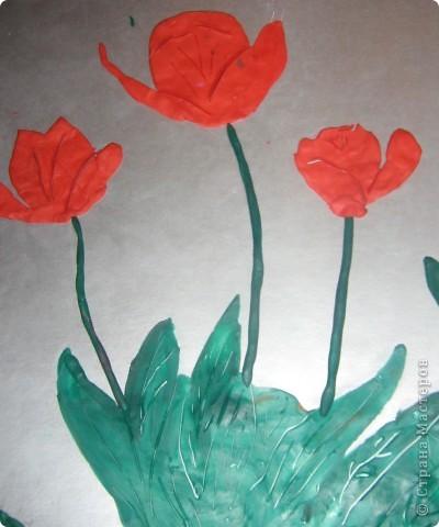 Красные тюльпаны фото 1