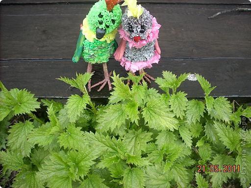 Девчонки и мальчишки! А так же их родители! Весеннего салатика отведать, не хотите ли? Давно мы с попугаями не угощали вас… Салат «Весна на Севере» покажем мы сейчас! Ну, а дальше в прозе…  фото 5