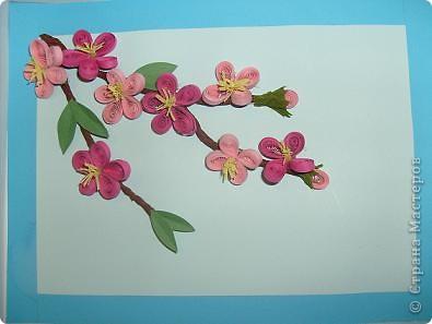 Так красиво, когда зацветает вишня. Она как будто в розовой пене стоит. У нас вишня еще только набрала цвет, весна в этом году поздняя.  фото 1