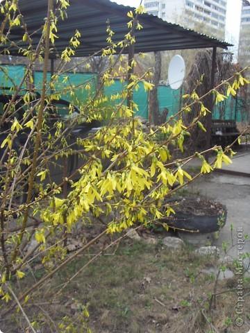 Весна в окошко заглянула, хотя и с опозданием... Ждала ее я раньше... И стала  рисовать, и представлять, Как вся природа будет просыпаться.  фото 3