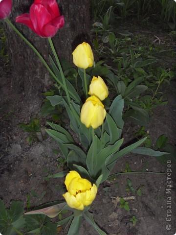 Весна в окошко заглянула, хотя и с опозданием... Ждала ее я раньше... И стала  рисовать, и представлять, Как вся природа будет просыпаться.  фото 6