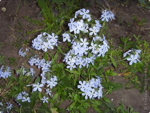 Весна в окошко заглянула, хотя и с опозданием... Ждала ее я раньше... И стала  рисовать, и представлять, Как вся природа будет просыпаться.  фото 8