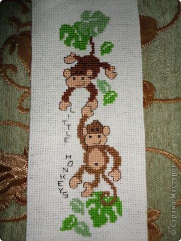 Любознательные обезьянки фото 2