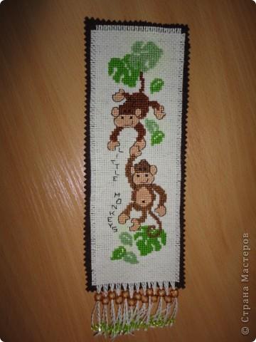 Любознательные обезьянки фото 3