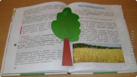 """Закладка для учебника """"Окружающий мир"""". Предлагаю Вам изготовить закладку """"Деревце"""". 1. Для этого Вам понадобится картон зелёного и коричневого цвета, зелёная бумага, клей ПВА. фото 1"""