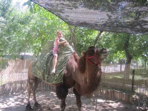 Обложка для учебника узбекского языка. Закончился переход через пустыню. Все очень рады и верблюды, и люди. Будут отдыхать, встречаться с друзьями, хвастаться, чего интересного привезли. Но для общения людям разных национальностей необходимо знать языки друг друга. Буду и я учить узбекский. фото 10